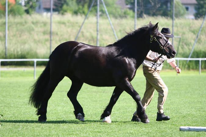 Pferderasse for Goldfisch rassen
